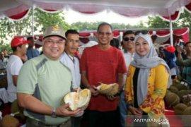 Durian citra manis menangkan Kontes Durian Babel 2020