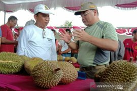 207 petani lokal Bangka Ikuti Kontes Durian