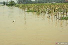 Banjir yang rendam sawah di Karawang makin meluas