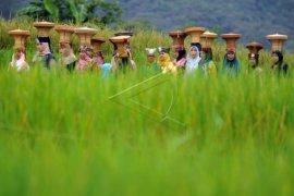 Tradisi Arak-Iriang Batagak Panghulu