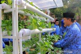 Sekda Kota Tangerang panen pokchoi hasil hidroponik