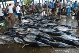 Tangkapan tuna sirip kuning