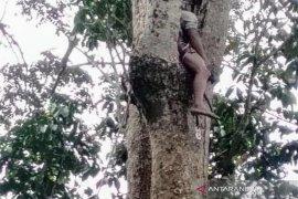 Seorang warga meninggal di atas pohon di Aceh Utara