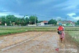 Jatah pupuk bersubsidi di Bangkalan berkurang