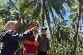 Padang Tikar jadi sumber kelapa dalam organik
