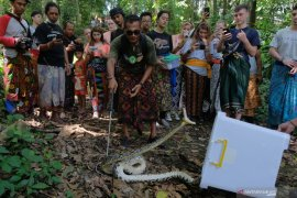 Wisatawan saksikan pelepasliaran ular Sanca di hutan Tabanan (video)