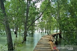 Warga Tanjungpunai rintis pembangunan objek wisata mangrove