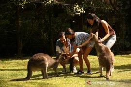 Taman Safari Bogor dan TSG galang donasi untuk satwa terancam di Australia