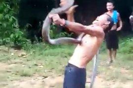 Atraksi Norjani bermain ular king kobra berujung maut