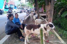Hewan ternak yang diperjualbelikan di pasar Purwakarta bebas antraks
