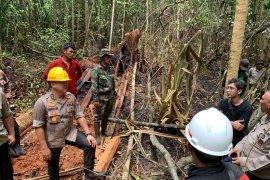 Pembalakan liar penyebab Karhutla di Pulau Rupat