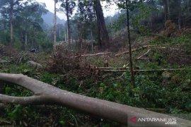 Satu tewas dan satu kritis tertimpa pohon di Bener Meriah