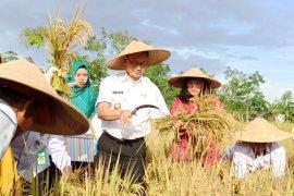 Wali Kota Pontianak apresiasi semangat Poktan tanam padi meskipun lahan terbatas