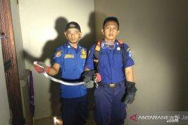 Warga temukan ular kobra satu meter di Kebon Jeruk