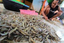 Bupati Bangka Tengah, Ibnu Saleh dorong masyarakat kembangkan bisnis perikanan
