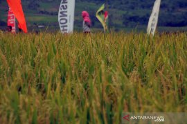 Pemkab Karawang diminta serius melindungi lahan pertanian