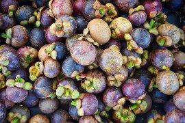 Pemkab Purwakarta dorong petani untuk tingkatkan produksi manggis