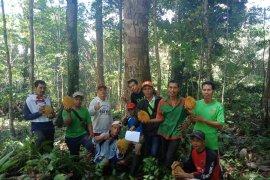 Pemkab Landak tetapkan pohon induk durian lokal di Desa Pawis
