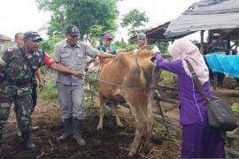 Pastikan penyebab kematian mendadak sapi di Situbondo, tim kesehatan hewan uji laboratorium (Video)