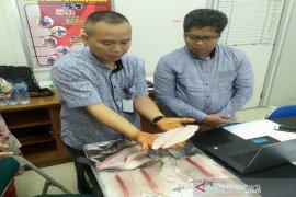 Regal Springs Indonesia pastikan ikan nila diolah dengan standar mutu
