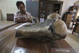 Penemuan fosil binatang purba