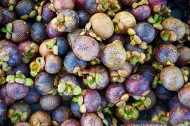 Manggis jadi buah unggulan di Purwakarta