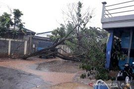 Hujan disertai angin kencang akibatkan rumah rusak dan pohon tumbang di Bandung