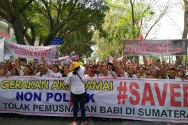 Ribuan massa 'Save Babi' demo di DPRD Sumut