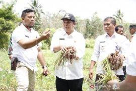 Padangsidimpuan kembangkan pertanian di Angkola Julu