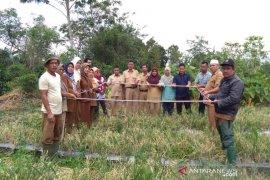 Produktivitas panen perdana bawang merah petani Tapsel capai 21 ton per hektare
