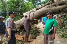 Jalan penghubung antardesa di Cianjur sudah dapat dilalui kendaraan