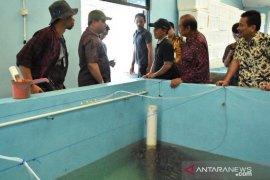 Pemprov Babel jadikan BBI Belitung sebagai sentra kerapu