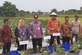 Pemkab Tangerang apresiasi petani garap tanaman sayuran di lahan tadah hujan