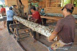 Pengolahan kayu kelapa di Aceh Barat