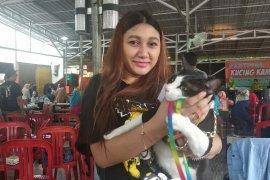 Festival Kucing Kampung di Kota Pontianak hadirkan kontes unik