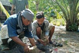 Warga Tanjungpunai siapkan lahan tanam jambu mete 10 hektare