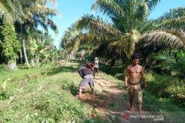 Situasi memanas, pemerintah desa Tapteng larang pemerintah desa Tapsel bangun jalan
