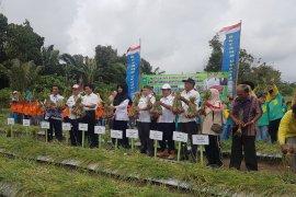 Pupuk MA11 mampu menekan biaya produksi petani Bangka Tengah