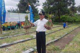 Produksi bawang merah Bangka Tengah 110,22 ton