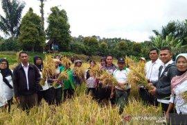 Produktivitas padi petani Parau Sorat Sipirok meningkat