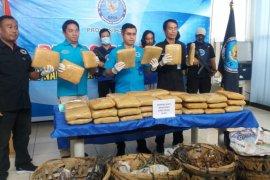 BNN Banten tangkap empat tersangka pengiriman 50 kilogram ganja