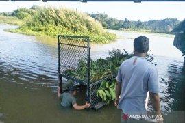 Buaya sering muncul, BKSDA pasang perangkap di sungai Aceh Jaya