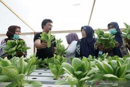 Pekebun di Gorontalo kampanye konsumsi sayur organik