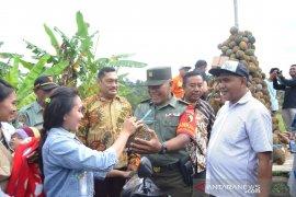 Ribuan warga berebut durian gratis di Kediri