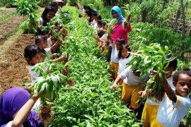 Siswa PAUD Kemala Bhayangkari  Boven Digoel dikenalkan menanam sayuran