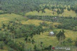 Pemerintah bantu benih padi gogo untuk ratusan Ha sawah tadah hujan