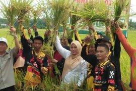 Bupati Irna minta petani terus tingkatkan produksi padi