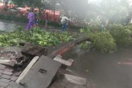 Pohon tumbang di sejumlah wilayah Kota Surabaya
