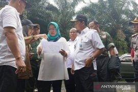 501 pohon sawit ditebang untuk rekolasi tetap warga  Bogor korban bencana