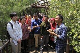 Pemkot Surabaya gandeng Kitakyushu teliti ekosistem mangrove Wonorejo dan Gunung Anyar